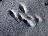More strange footprints in the snow at Everest Base Camp
