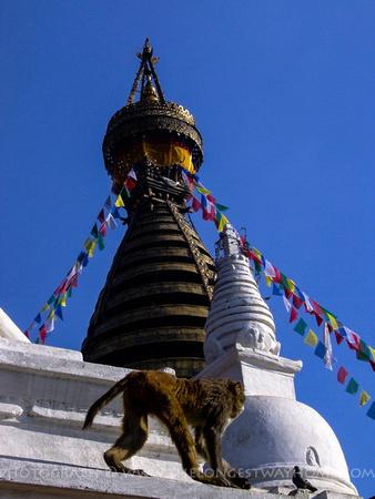 Monkey and prayer flags on Swayambhunath Temple