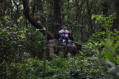 Tourists deep in the chitwan jungle on an elephant