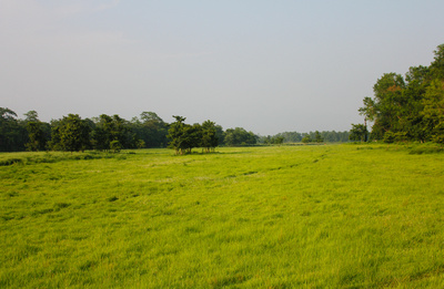 The tall lush elephant grass plains and thick jungle of Chitwan National Park