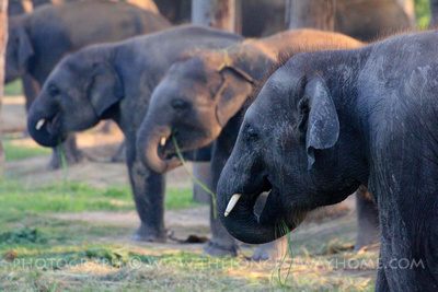 Visit the Elephant breeding center