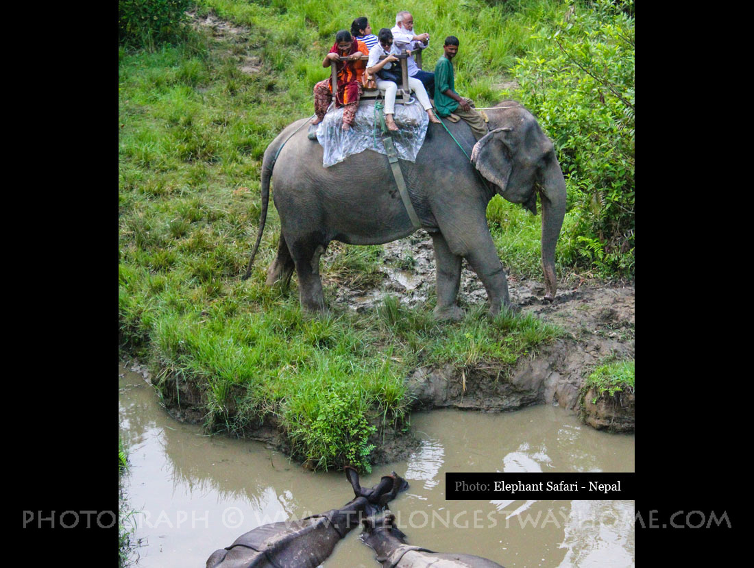 Elephant with tourists and two one-horned rhinos in Chitwan