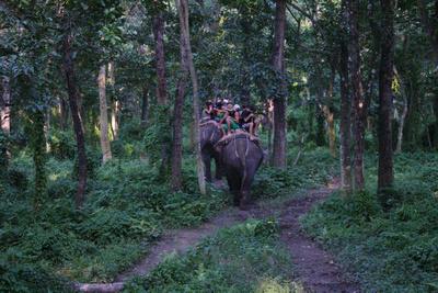 Tourists riding elephants deep in the Chitwan jungle