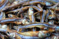 Dried Bolinao fish