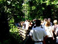 Mass of tourists in Sepilok taking photos