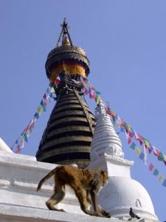 The Monkey Temple in Kathmandu