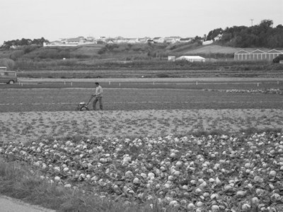 Tending to the crops in Portugal