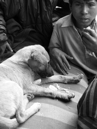 Street children of Kathmandu feeding their dogs